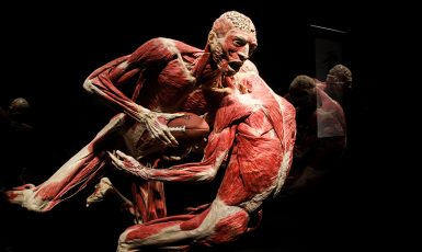 Body Worlds Exhibition (Discovery Times Square)