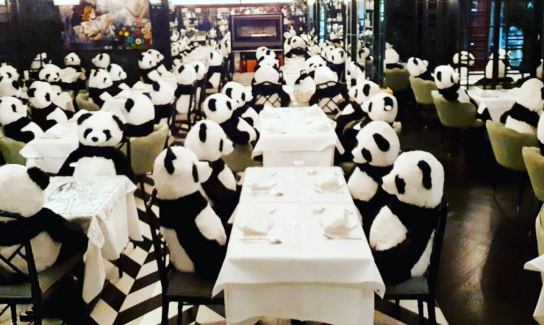 Místo hostů mají ve frankfurtské restauraci 100 pand. (IG @pino.frankfurt)