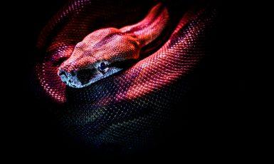 Ilustrační foto (pexels.com/Jan Kopřiva)