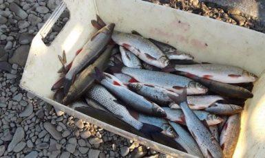 Uhynulé ryby z Bečvy (2020) (ČTK)