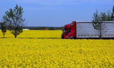 Kvetoucí řepková pole u silnice nedaleko Brandýsa nad Labem (jaro 2021) (ČTK/Fotobanka ČTK/Ruml Miloš)