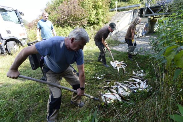 Rybáři nakládají leklé ryby z řeky Bečvy (ČTK/Peřina Luděk)